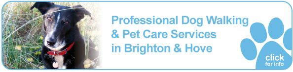 Click here to learn more about our dog walking service in Brighton and Hove.
